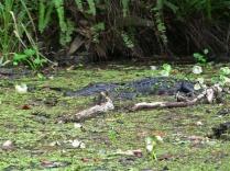 Gator625X_edited-1