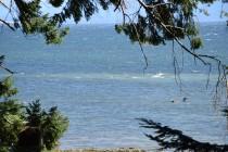 Seal Bay Nature Park