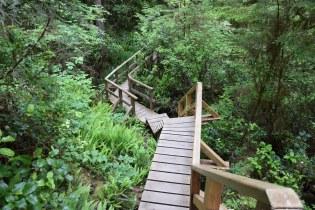 Rainforrest Trail B